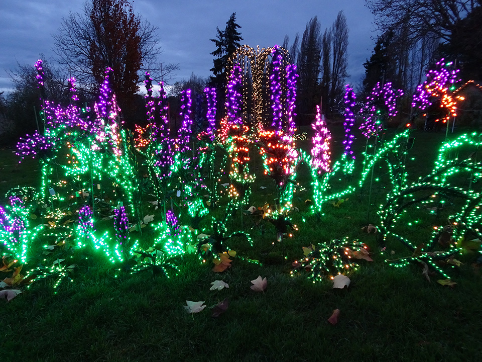 24th Annual Garden d'Lights at the Bellevue Botanical Garden - Garden D'Lights - Nov 24 - Dec 30, 2018 Bellevue Botanical Garden
