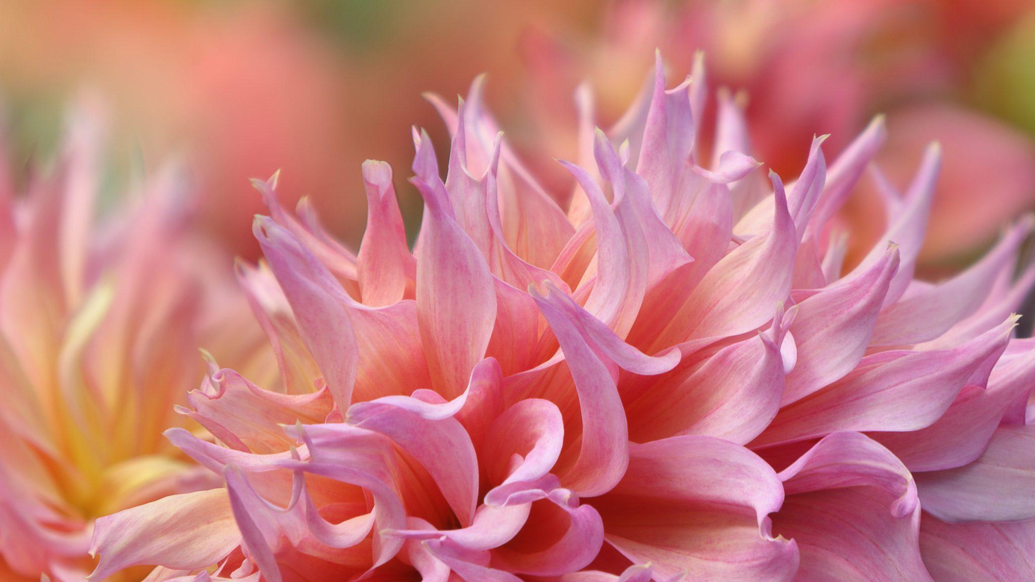 Online Gardening Resources