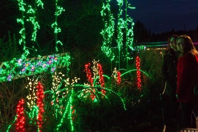 Oregon Gardens Christmas.Garden D Lights Bellevue Botanical Garden