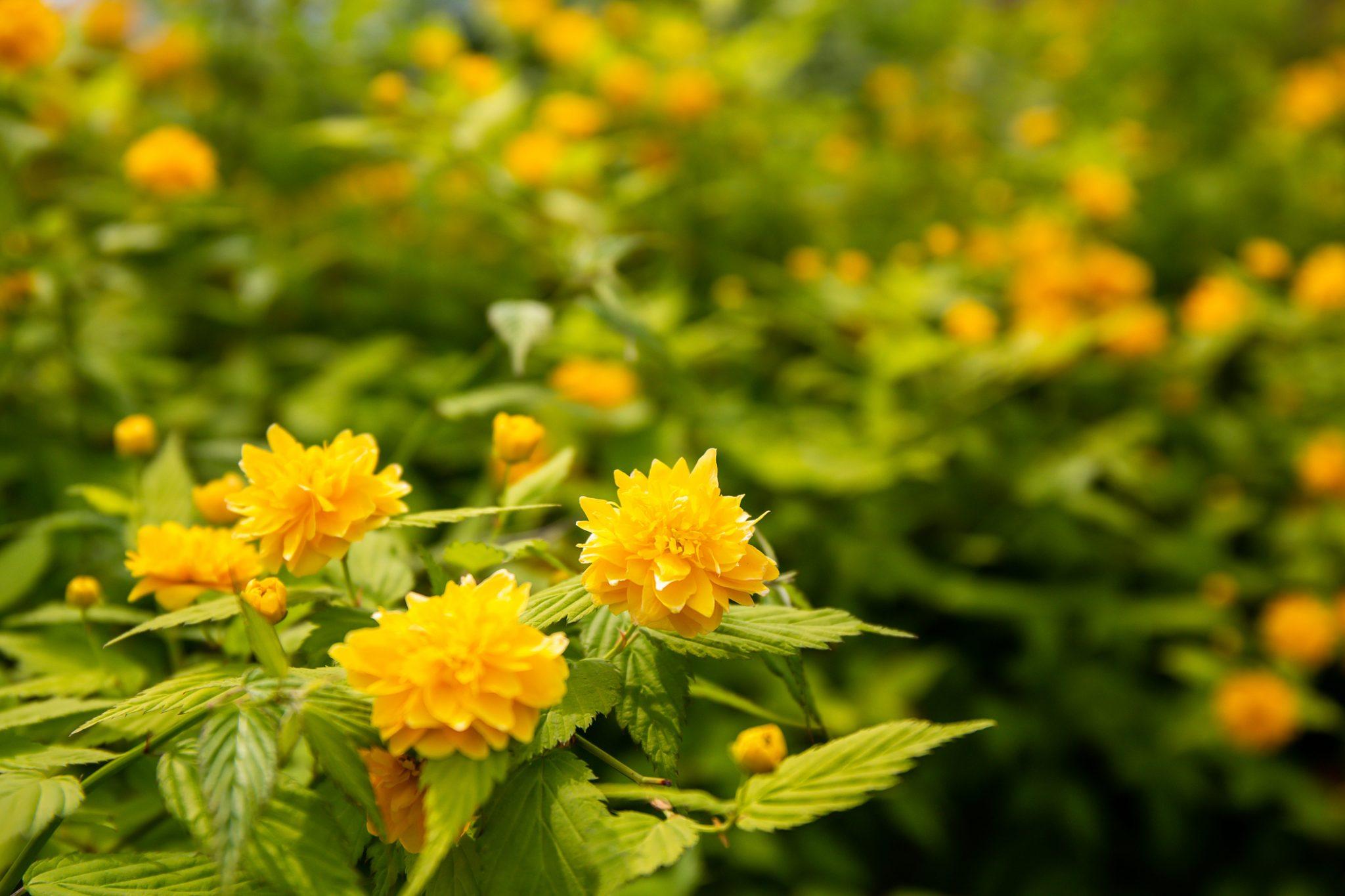 Spring Tips for Gardeners