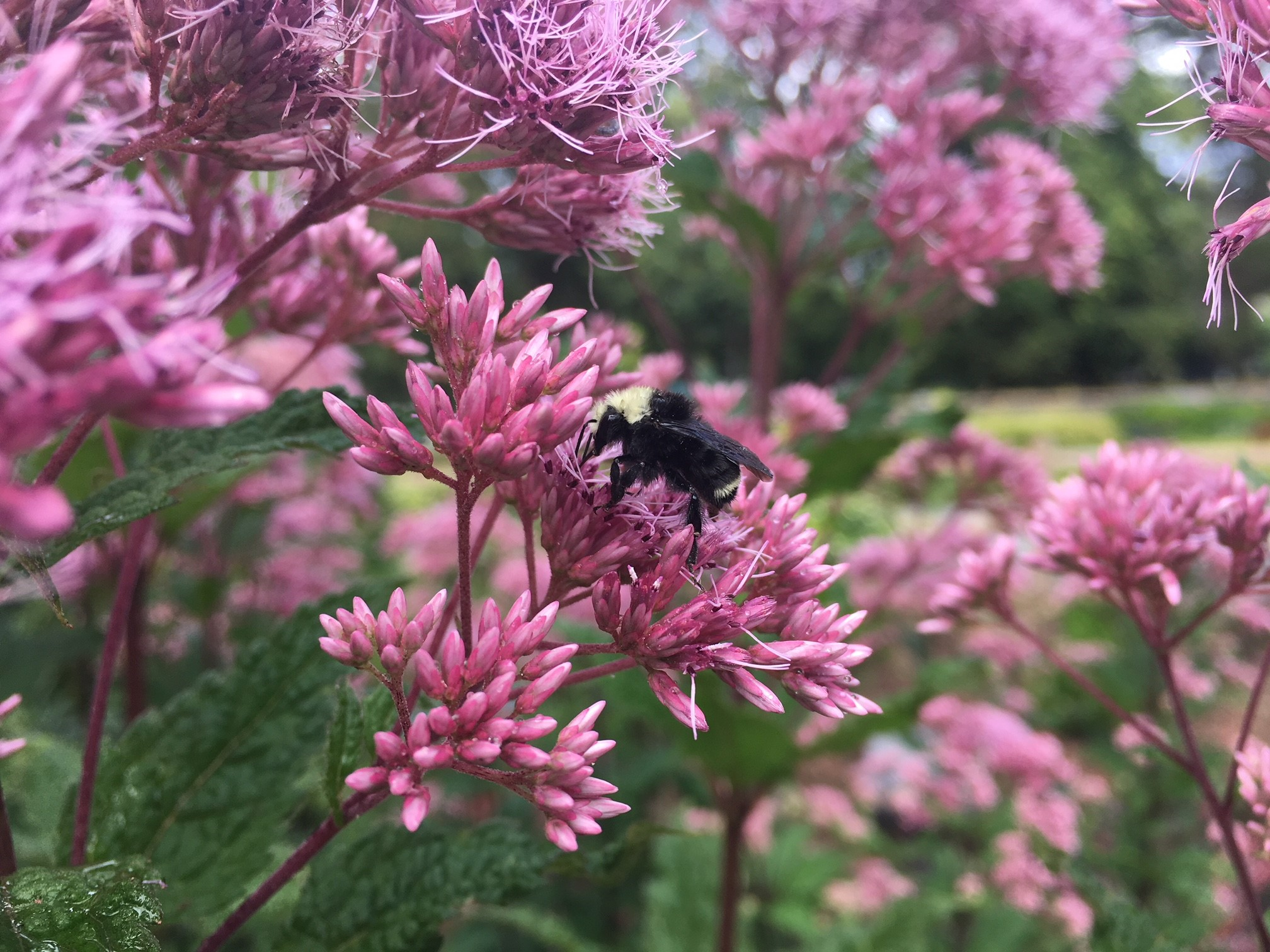Planning – and Planting – for Pollinators